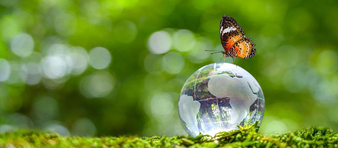 So ziehen Sie umweltfreundlich um